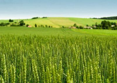 Sous Cellule Agriculture